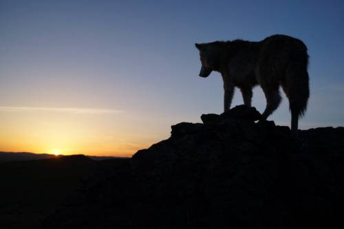Read more about Wolf Totem