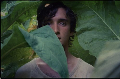 Read more about Happy As Lazzaro